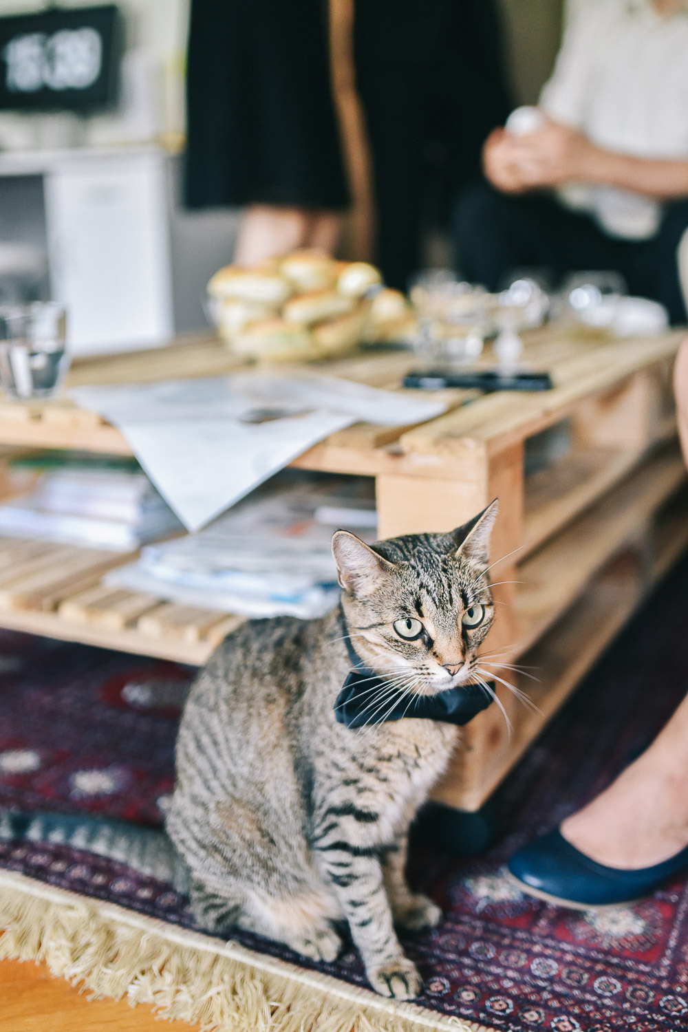 cat at the wedding